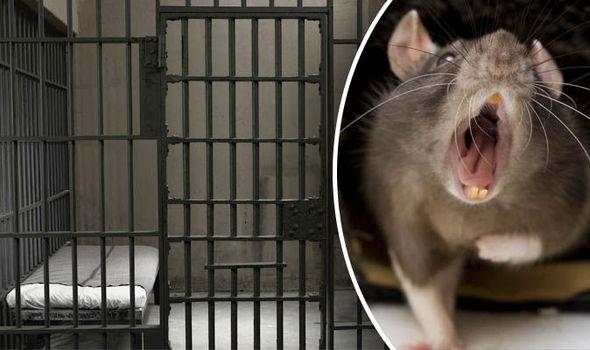jail-rat